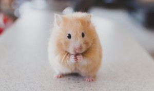 Just Accept It, This Hamster Is Unique!