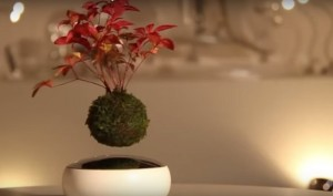Japanese Company Selling Floating And Spinning Air Bonsai Trees