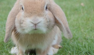 Soon London To Have World's First Bunny Spa
