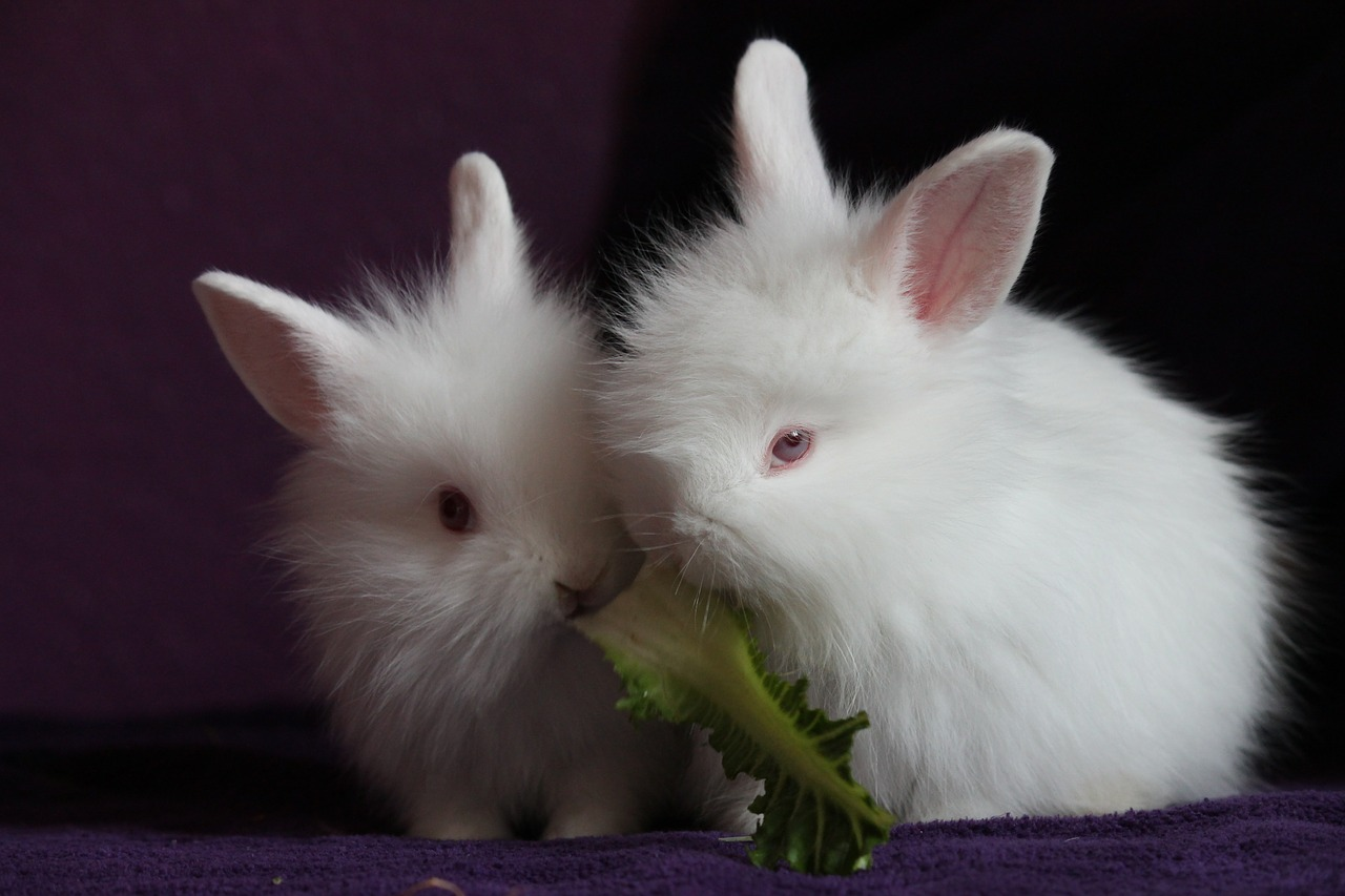 rabbit-426128_1280