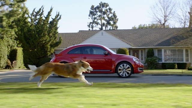 dog-chase-vehicles