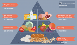 The Food Pyramid – Healthy Breakfast – What Our Body Needs (1)
