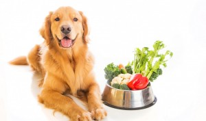 A Healthy Dog Diet