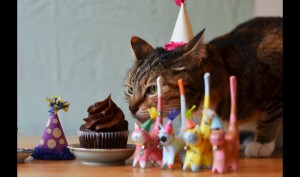 Rachel Hale Glamour Cats Birthday Party Supplies For a Purrfect Party