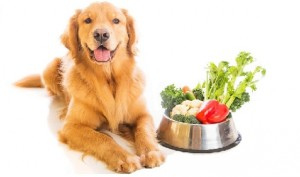 Best Dog Foods – Secrets to a Long and Healthy Life For Your Pet