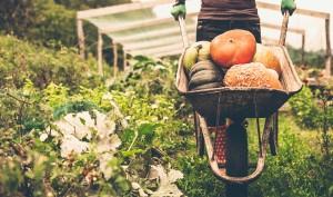 Benefits Of Organic Food In The Modern Era