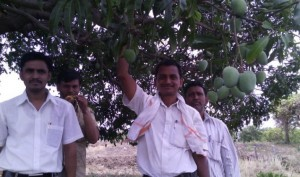 Engineer turned Farmer Ravi Marshetwar grafts 51 types of Mango on one tree