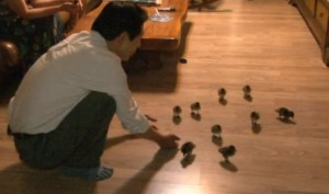 Korean man takes care of 21 ducklings like his children and go for hiking with them