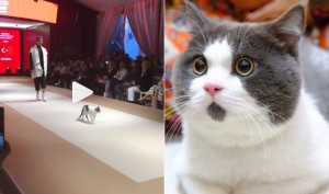 Viral Video: This cat's CAT-WALK is the real show steal at fashion event in Istanbul!